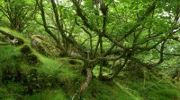 Hazel wood - Atlantic