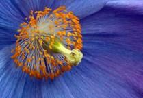 Poppy, by Ann Jeffray