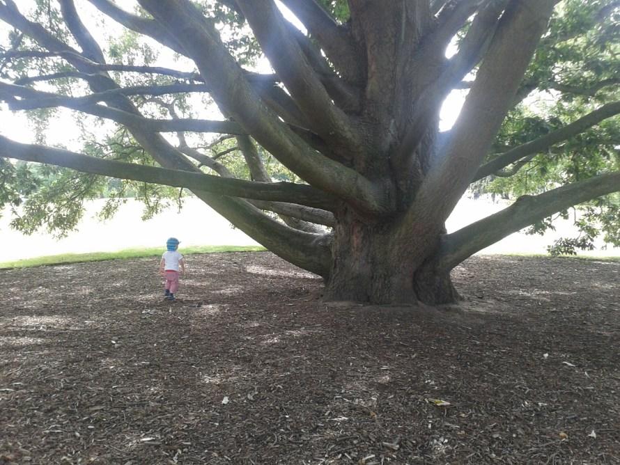 Kew Gardens London with Kids!