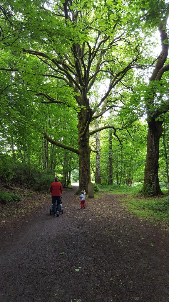 Birnam, Beatrix Potter and the Birnam Oak