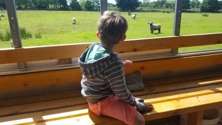 On the Farm Safari