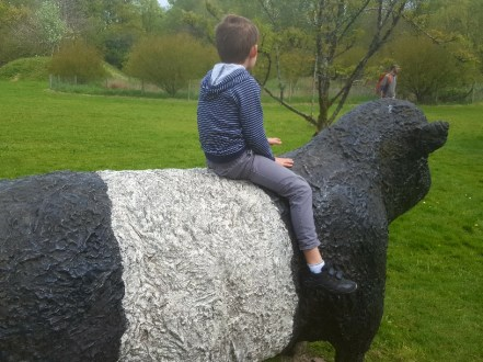 Belted Galloway cattle sculptures