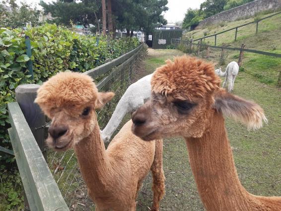 Love Gorgie City Farm