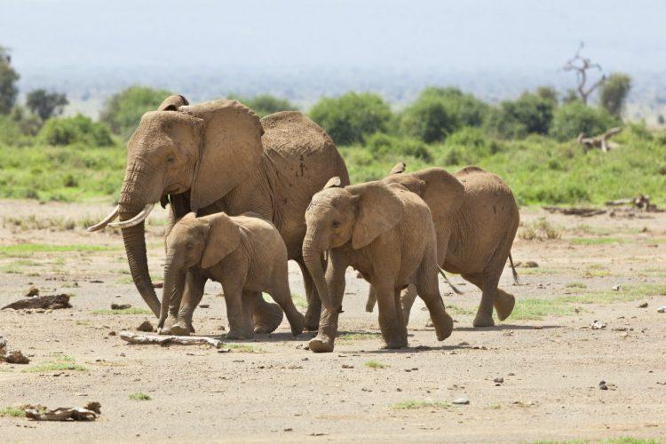 elephant-family-in-kenya-e1588349606897.jpg