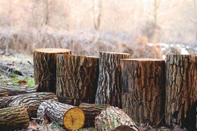 The Green Lumber Fallacy In Entrepreneurship