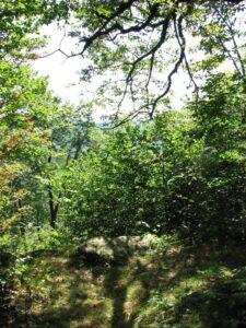 Vista near Beech Hill Rd