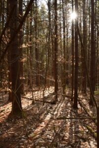 Sunlight shining through the trees