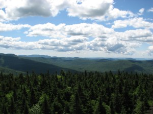 View from Balsam Lake Mountain fire tower.