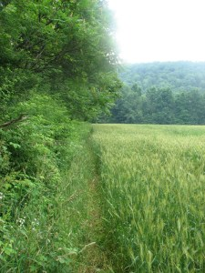 Path along the edge of a field east of White Church Rd