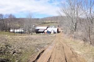 Muddy tractor path behind a farm along Stephens Gulch Rd - FLT M10
