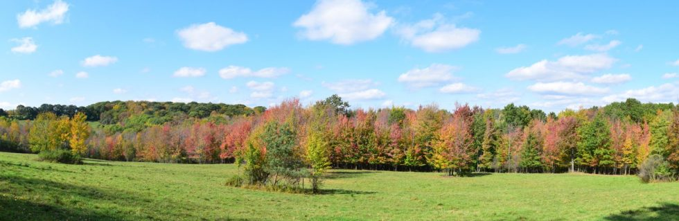 Field and fall colors