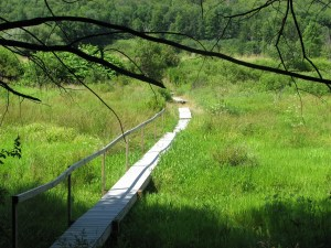 Footbridge over a marshy area just south of NY 79