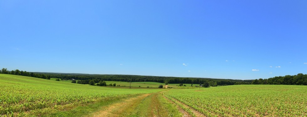 Panoramic view looking west across a corn field east of Wiscoy Rd
