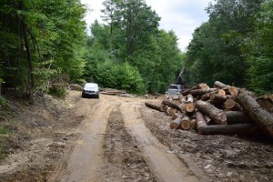 Logging staging area between Sawmill Run Rd and W. Branch Bucktooth Hollow Rd