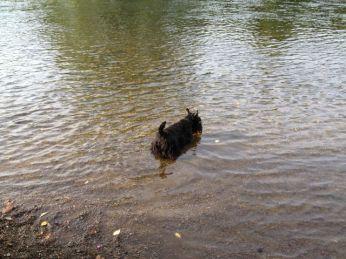 Me in the River Teviot