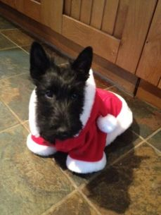 Dressed for Santa