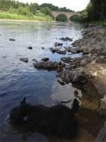 River Tweed, having yet another slurop