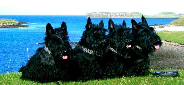 Kelpie, Izzy, Finlay & Bobby, Isle of Skye, 2005 copy