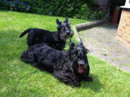 Summertime 2013 for Bobby and Poppy