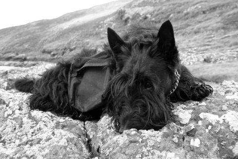 Bobby, Isle of Skye, 2005