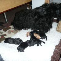 Fabi's had babies