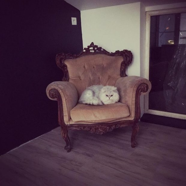 interieur chatterie