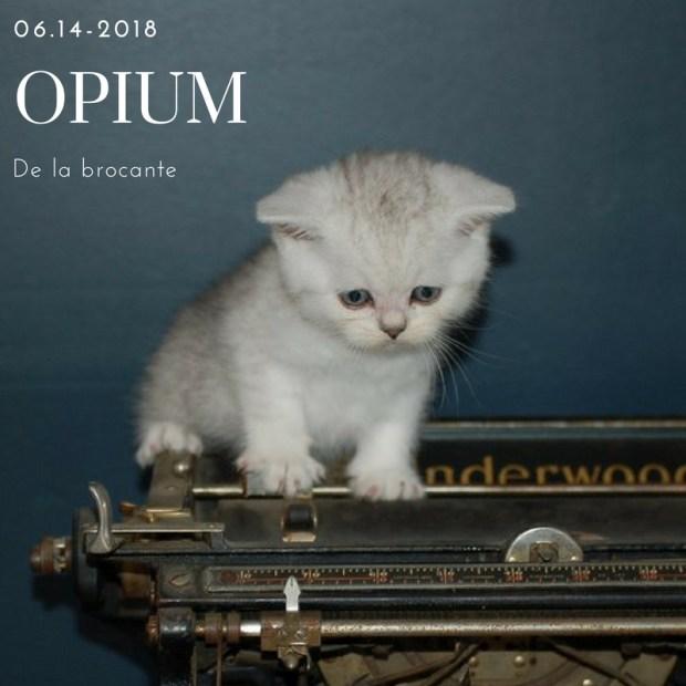 scottish straight opium