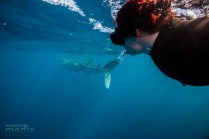 Watching the whale shark