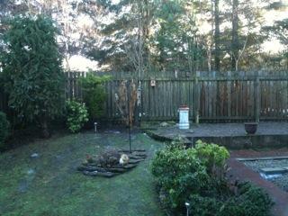 Songbirds in our Garden