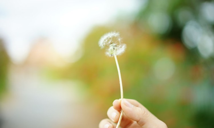 The Hay Fever Survival Guide