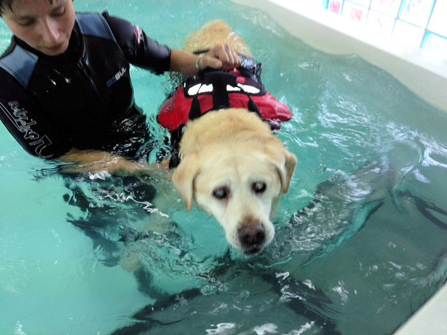 Hydrotherapy 3