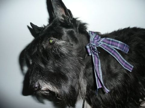 Bobby wearing a very elaborate Ribbon - it was soon cut down to size!