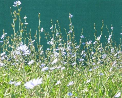 Green Wildflowers7crop