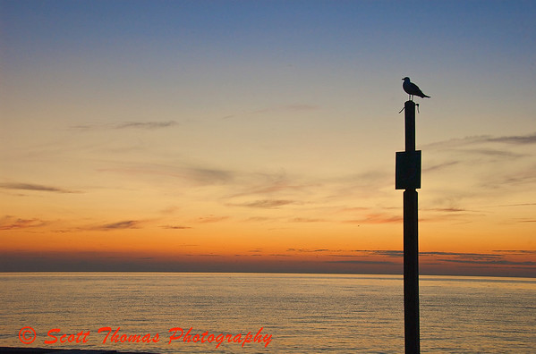 Seagull seemingly enjoying the view of the colors following a sunset on Lake Ontario near Oswego, New York.