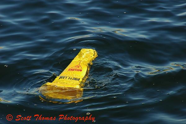 Seen floating in Crescent Lake near the Boardwalk resort area in Walt Disney World, Orlando, Florida.
