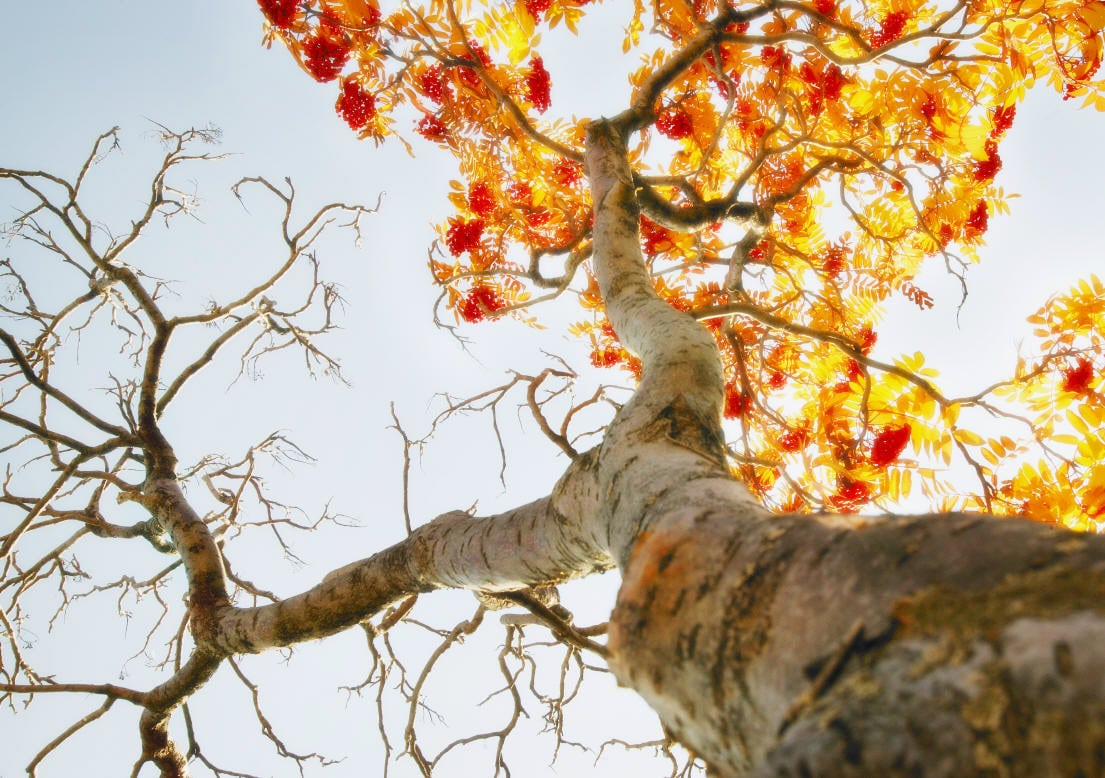 Tree Ring Worksheet Scouter Mom