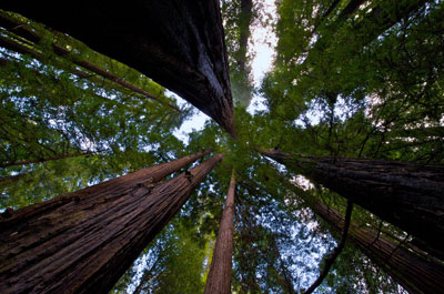 Trail Guide Humboldt Redwoods State Park