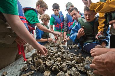 Chesapeake Bay Troop 99 Oyster