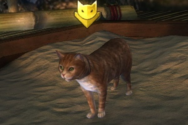 Hungry cat Guild Wars 2 home instance