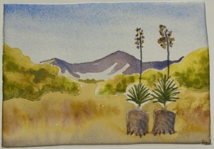 A Couple of Yucca's