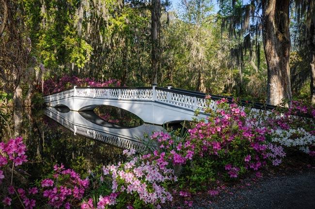 Image result for magnolia plantation