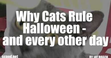 Why Cats Rule Halloween – and every other day