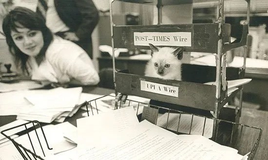 Krell's pet kitten, Andy, visits The State in 1972.