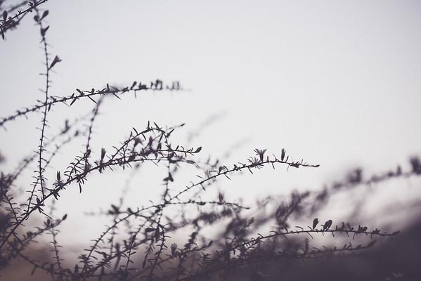 Image result for melancholy flowers