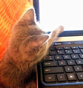 Our pets are always trying to help me work.