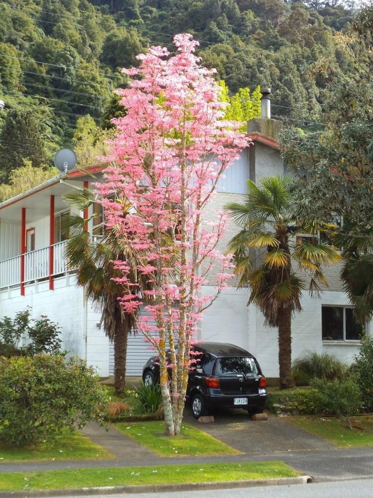 Flamingo tree leaves: Festival of leaves Week 3 (4/6)