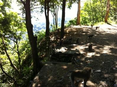 Lombok monkeys 2