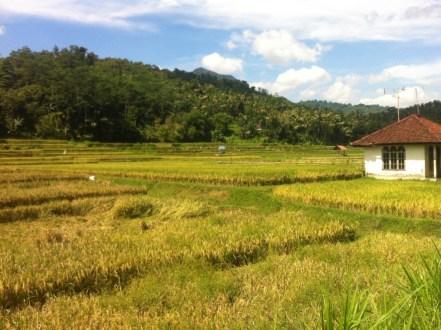 Lombok nature 3