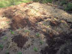 Compost in the middle ring of cucumbers