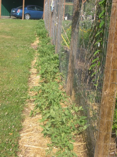 I have over 300 hundred tomato plants. I guess I will be selling some tomatoes this year. I got kind-of carried away since I didn't grow enough last year.